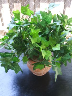 Fake plant $20 firm for Sale in Mesquite, TX