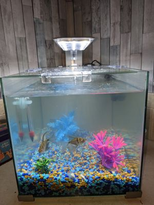 5 gallon fish tank with fish and extras $20 for Sale in Winter Haven, FL