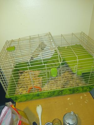 Cage an guinea pig for Sale in Lexington, KY