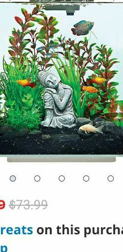 5 Gallon Fish Tank With Plant Gravel for Sale in Rosharon,  TX