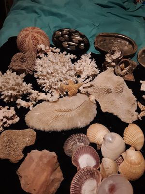 Ocean shells creatures and coral for Sale in Abilene, TX