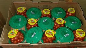 Fresh cherry tomatoes for Sale in Festus, MO