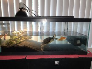 $200 for all - 20 gal tank, 10gal tank, 2 filters, decorations, aquatic turtle, Oscar and peacock Chiclid for Sale in Beverly Hills, CA