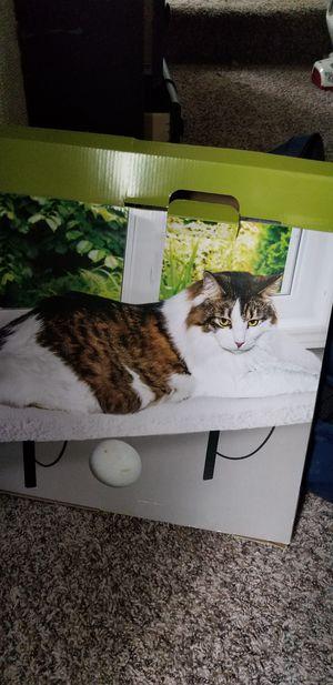 Window perch cat for Sale in East Wenatchee, WA