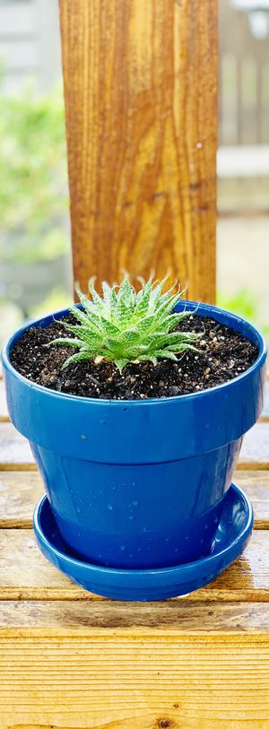Live indoor Aloe succulent plant in a ceramic planter flower pot with base—firm price for Sale in Seattle, WA