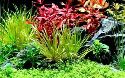 Planted Fish Tanks for Sale in Whittier,  CA