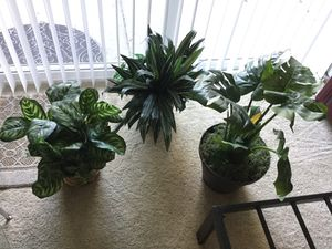 Fake decor silk indoor plants for Sale in Irvine, CA