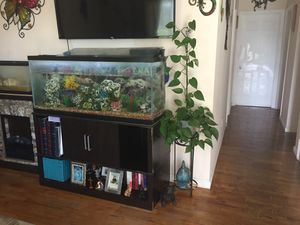 55 Gallon tank with African cichlids for Sale in Sand City, CA
