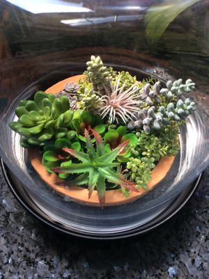 Succulent terrarium for Sale in Stamford, CT