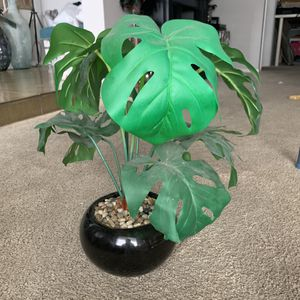 Fake plant for Sale in Seal Beach, CA