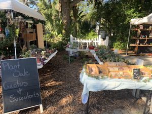 Cactus and succulents sale. I'm set up at the crystal beach craft sale today and tomorrow from 10 - 4pm prices vary for Sale in Palm Harbor, FL