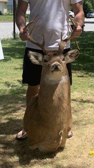 Huge Taxidermy Deer Head for Sale in Glenarden, MD