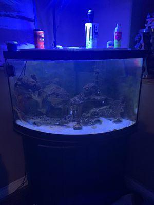 55 gallon fish tank for Sale in Corona, CA