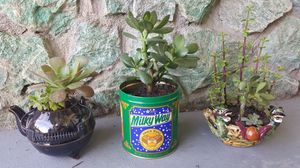 Potted succulent plants. $8 each for Sale in Clovis, CA