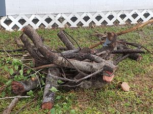 Free firewood for Sale in St. Petersburg, FL