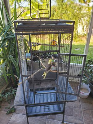 Bird and cage for Sale in Zephyrhills, FL