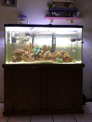 Salt water fish tank for Sale in Costa Mesa, CA