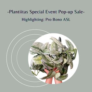 Houseplants Pop-Up Sale by Plantiitas for Sale in Los Angeles, CA