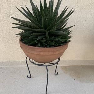 Large Poted Succulents with Stand for Sale in Huntington Beach, CA