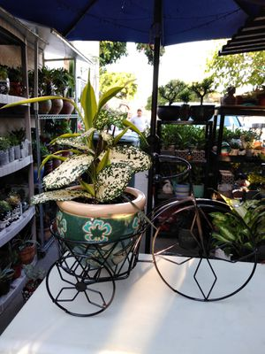 BIKE POT & PLANT (FIRM PRICE) for Sale in Lynwood, CA