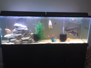 135 gallon tank long with stand and decor 300$ for Sale in Jonesboro, GA