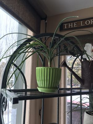 Cute little ceramic plant pot 6 in. With plant! for Sale in Rapid City, SD