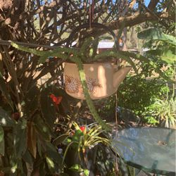 Plant And Pot for Sale in Haines City,  FL
