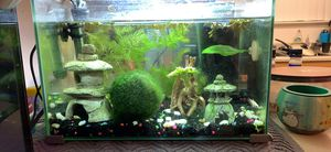 5 gallon fish tanks w/ decor for Sale in South Jordan, UT