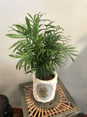 Nice Palm tree house plant in the cute planter made from candle for Sale in Denver, CO