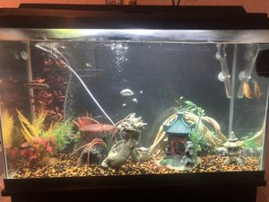 30 gallon fish tank and stand for Sale in Palm Harbor, FL