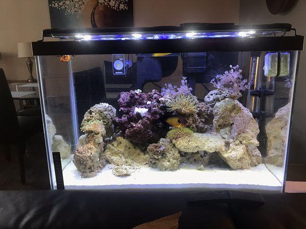 20 gallon reef saltwater aquarium setup + stand