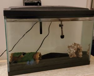 10 gallon tank with rainbow shark (catfish) for Sale in Lake Bluff, IL
