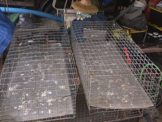 Bird cage For Shows for Sale in Anthony,  FL