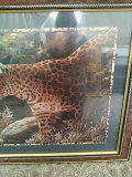 Leopard for Sale in Pine Ridge, FL