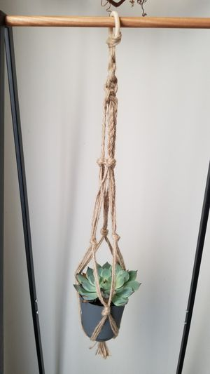 Macrame planter with available succulant for Sale in St. Louis, MO