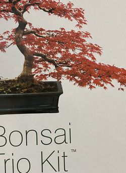 Bonsai Trio Kit for Sale in Poinciana,  FL