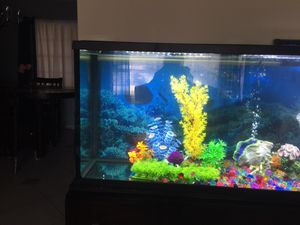 Fish tank for Sale in Winter Park, FL