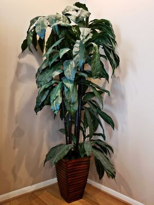 Bamboo plant/decor for Sale in Katy, TX
