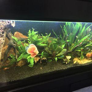 Freshwater Aquariums Discus Fish Tank for Sale in Huntington Beach, CA