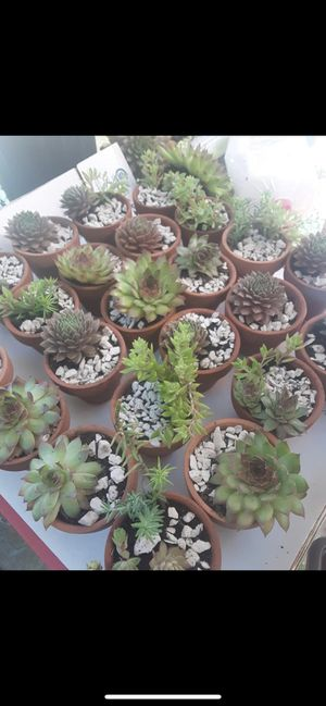 Succulents for Sale in Norwich, CT