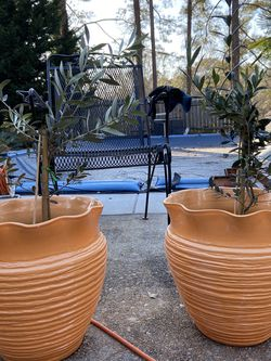 Olive Tree In Ceramic Planter for Sale in GA,  US