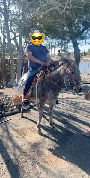 Donkey/Burro for sale for Sale in Riverside, CA
