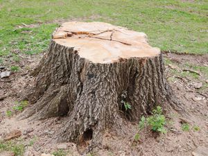 Stump removal for Sale in Wake Forest, NC
