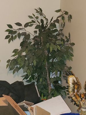 Fake plant for Sale in Lemoore, CA