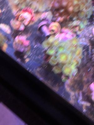 Aguarium. Live rock . Coral 25$ everything for Sale in Los Angeles, CA