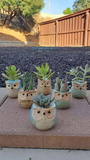 Owl pots with succulents for Sale in Menifee, CA