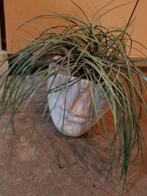 Fake plant and half head planter for Sale in Denver, CO