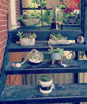 Live Succulent terrariums for Sale in Houston, TX