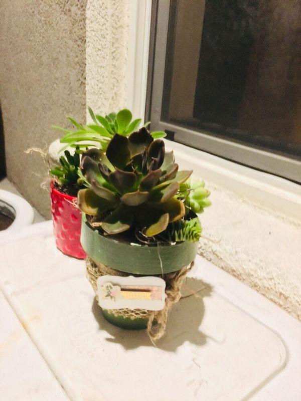 Beautiful succulent arrangement in green planter