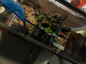 Fish tank aquarium for Sale in Independence, MO